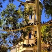 South Australian Museum. Photo: Textillio