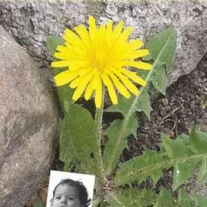 Forsidebillede fra bogen Mælkebøttebarn i blomst - campbell.dk