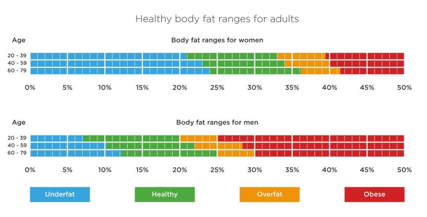body-fat-ranges-adults