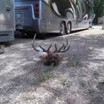 Hunting season in full swing (High Country RV Park in Naturita CO)