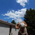 Rental cabins at Sugar Loafin' RV Campground in Leadville Colorado