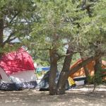 Awesome tent sites in the trees!