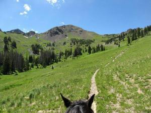 Trail near Winding River Resort