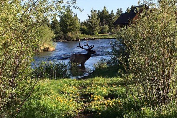 Winding River Resort (Grand Lake CO)