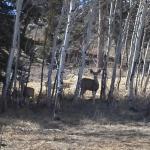 Wildlife at Blue Mesa Escape, west of Gunnison Colorado