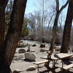 In the summer these trees fill in to make nice shady spots! (Chalk Creek RV Park & Campground)