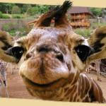 Wondering what to do? Come visit me at the Cheyenne Mountain Zoo! Garden of the Gods RV Resort in Colorado Springs.