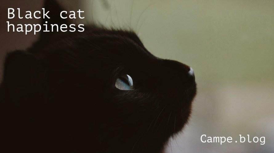 Black Cat Happiness