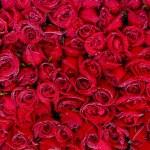 薔薇の花束は本数に意味がある