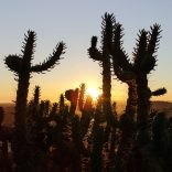 Cactus in sunset Portugal