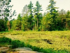 Swan Lake trail views
