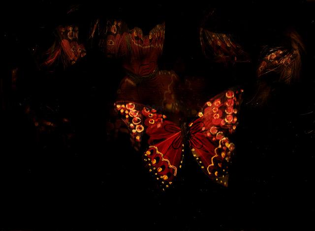 vlinders beweging
