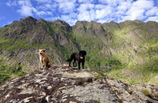 CamperDogs on Tour auf den Lofoten