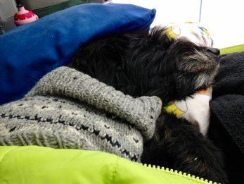Wilma schläft mit Norweger-Pulli