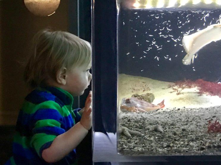 Merlin ist fasziniert von der Fischfütterung