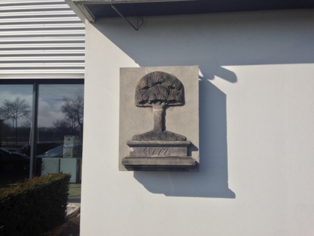 De boom aan het voormalige hoofdkantoor aan de Blaloweg in Zwolle