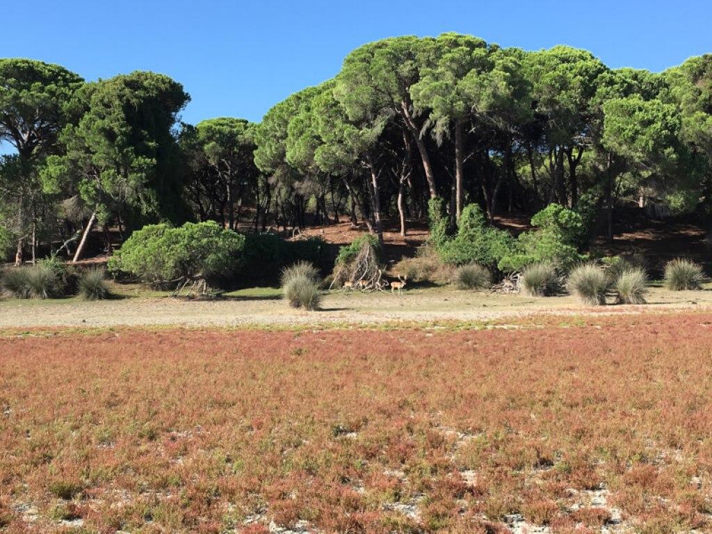 Het park Doñana en enkele herten.