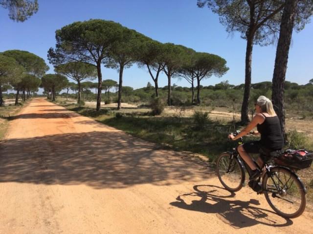 Op snelheid door nationaal park Doñana. Na 8 uur fietsen en 64 kilometer waren we het overigens wel zat. De weg was niet overal zo recht en glad...