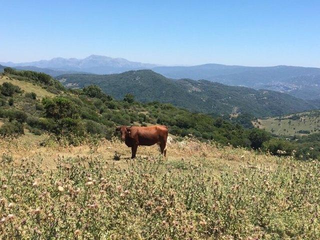 Zicht op de bergen van Alcornocales.