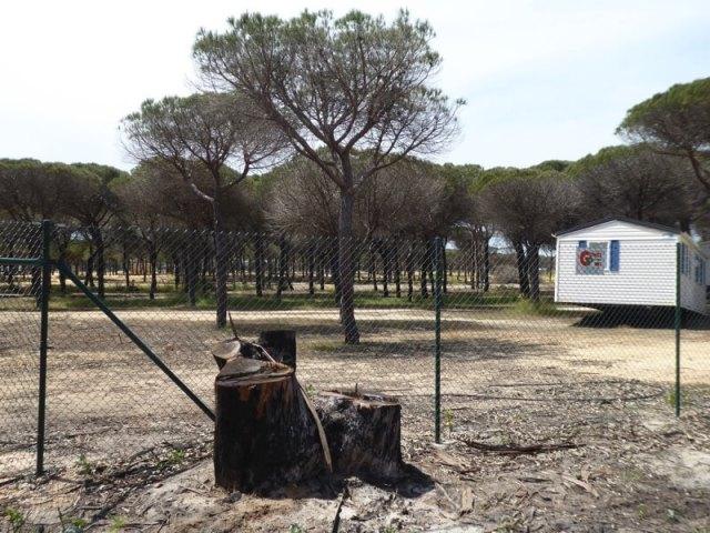 Op camping Doñana Playa waren de gevolgen groot. Langzaam wordt het terrein onder handen genomen. (nummer 3)