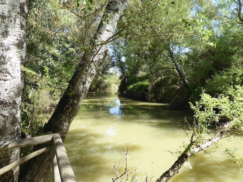 Dit is de Río Guadiamar vlakbij het bezoekerscentrum van Aznalcázar.