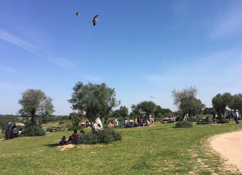 Je kan in Dehesa wandelen en fietsen, of picknicken met de ooievaars die vliegen boven je hoofd.