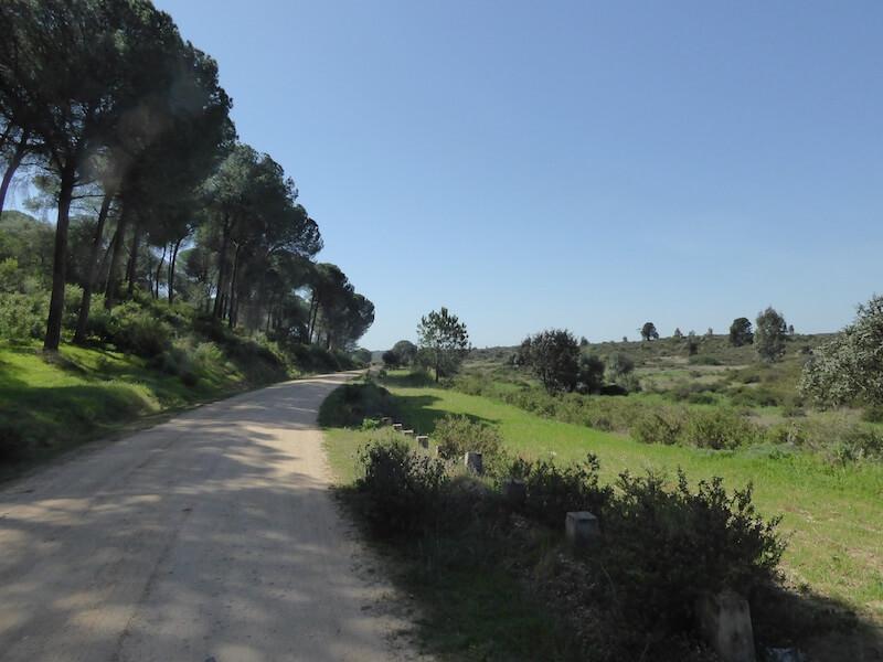 Tientallen kilometers zandpaden brengen je door Piñares de Aznalcázar.
