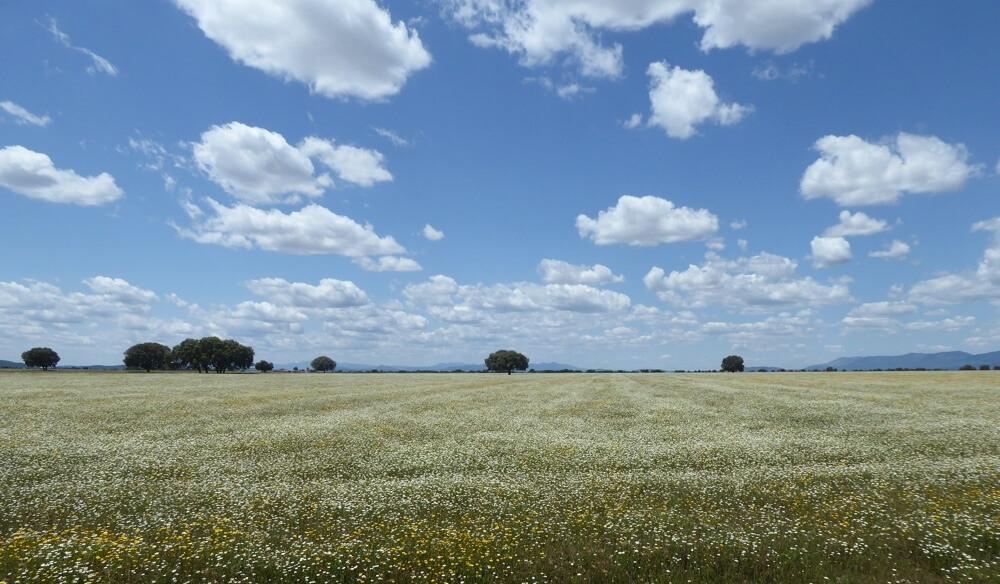 Het landschap rondom Horcajo de los Montes (Route Horcajo de los Montes - San José).