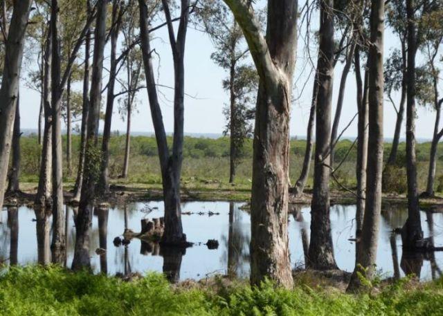 Nr.5. La Laguna de Ribetehilos is één van de weinige oorspronkelijke meren, die nog over zijn in Doñana.