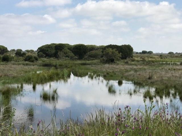 Ook Europa vindt dat Doñana zo moet blijven.