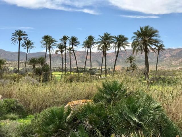 Een oase achter het strand Playazo in de buurt van Rodalquilar.