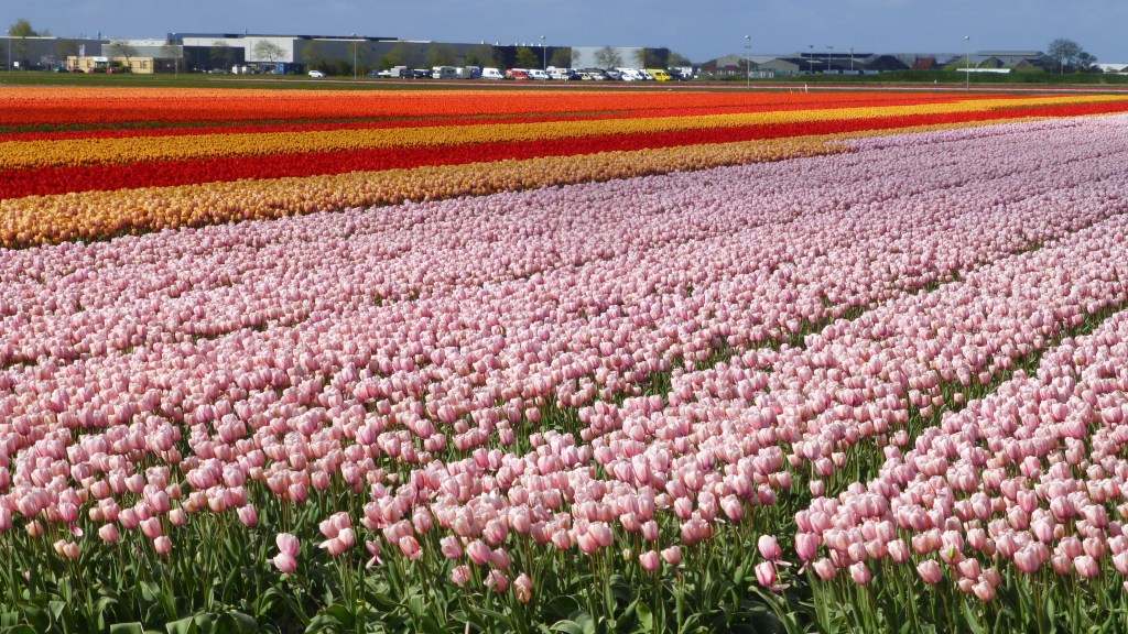 holland and the Bulb fields