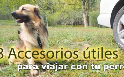8 accesorios útiles para viajar con perros en Camper, Autocaravana o Camping