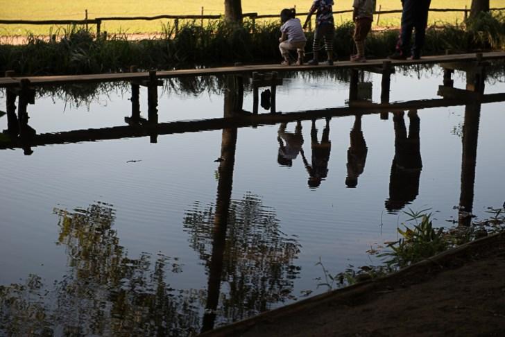 どんぐり池