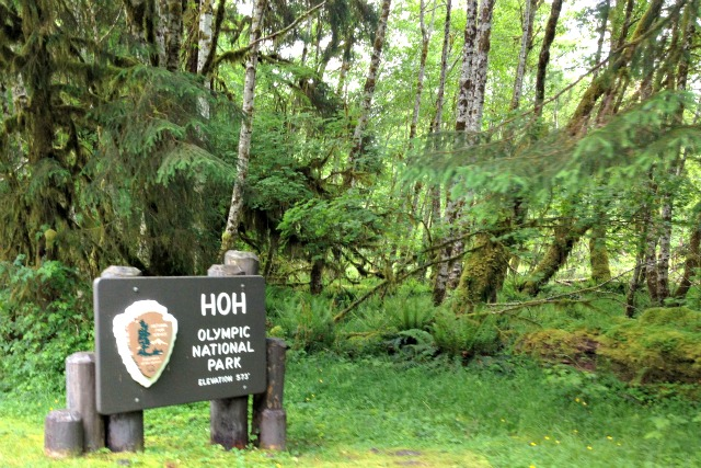 Kam visits the Hoh Rainforest in Olympic National Park - Campfire Chic