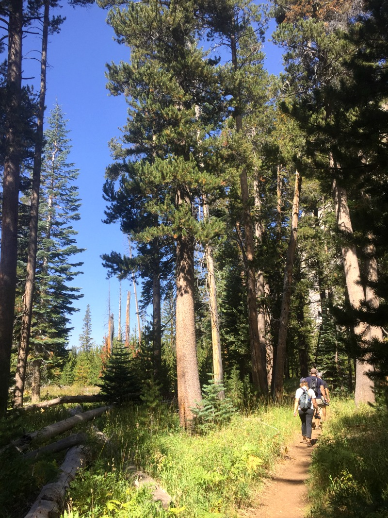 Hiking Through Yosemite Backcountry - Grand Canyon of Tuolumne with Kam of Campfire Chic