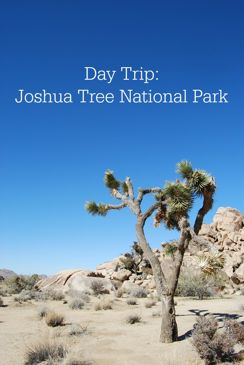 Day Trip Joshua Tree National Park - Campfire Chic
