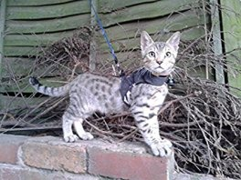 Mynwood cat jacket harness