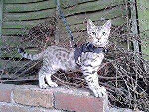 Mynwood cat jacket harness
