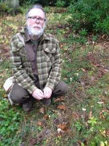 trooping funnel mushrooms