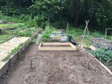 Our first bed in the garden!