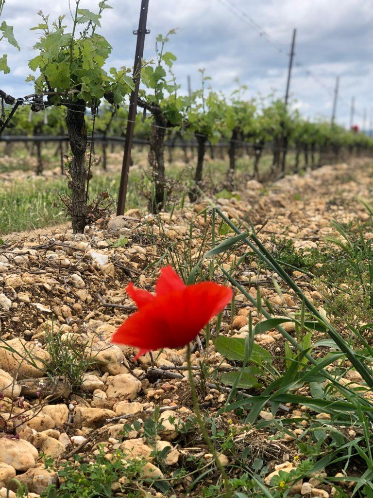 dégustation et visite offerte, Gard, Bouteilles, Vin, Uzès, Cévennes
