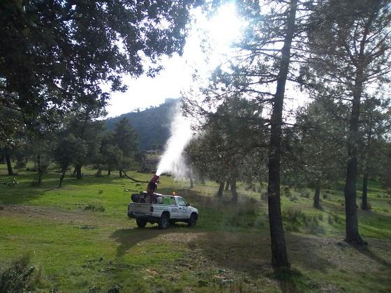 Trabajos realizados por el Ayuntamiento de Andújar para controlar esta plaga.