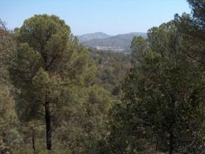 Parque Natural Sierra de Andújar. Foto: Junta de Andalucía.