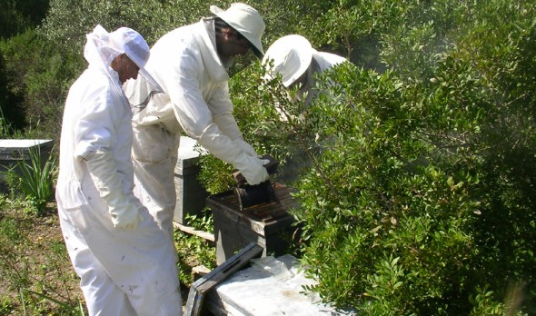 Ayudas para la producción de la miel