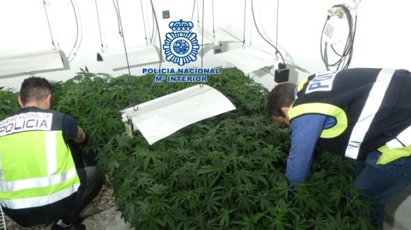 Plantación de marihuana de Jaén