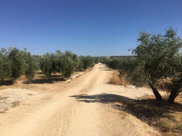 mejora de caminos rurales