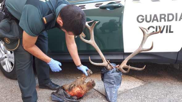 caza furtiva en La Carolina