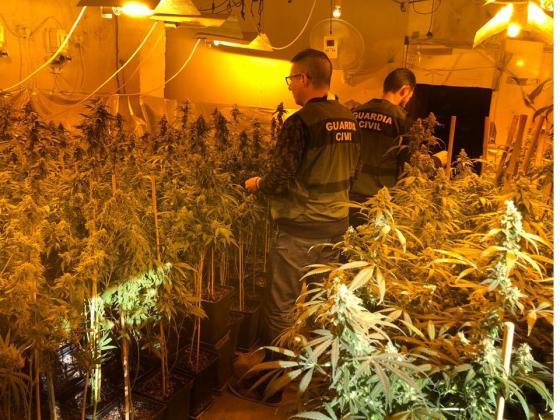 marihuana en Arjona
