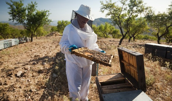 ayudas apicultura
